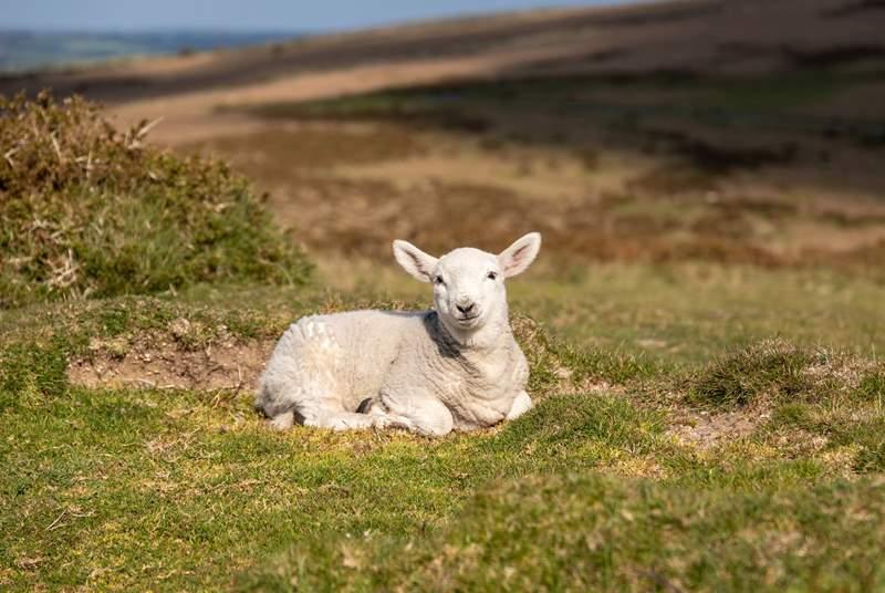 Cuteness overload on Dartmoor.