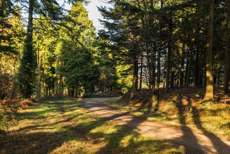 Bring your walking boots and explore Bishops Wood in Wadebridge, it is truly beautiful.