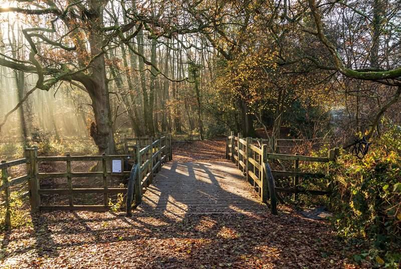 Explore the Ashdown Forest.