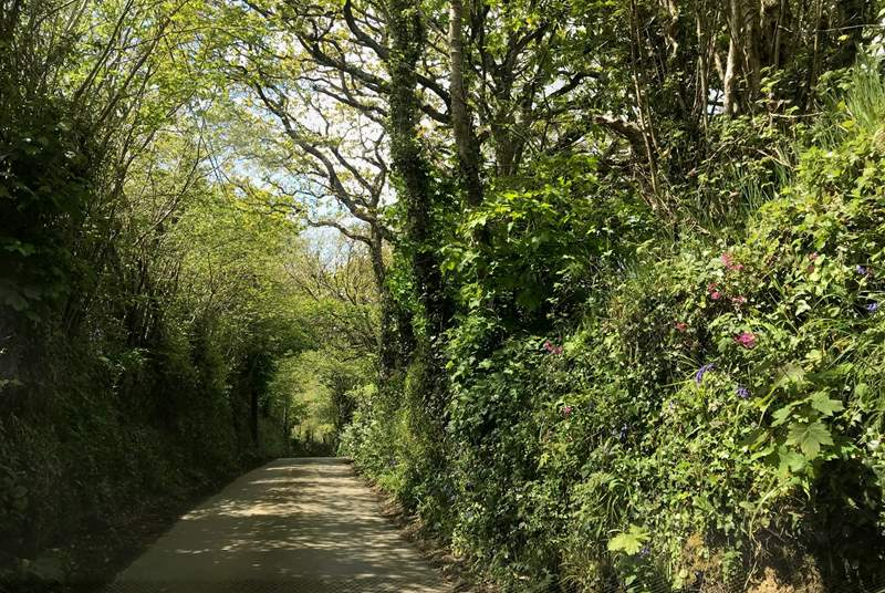 The little lane leading down to the cove.