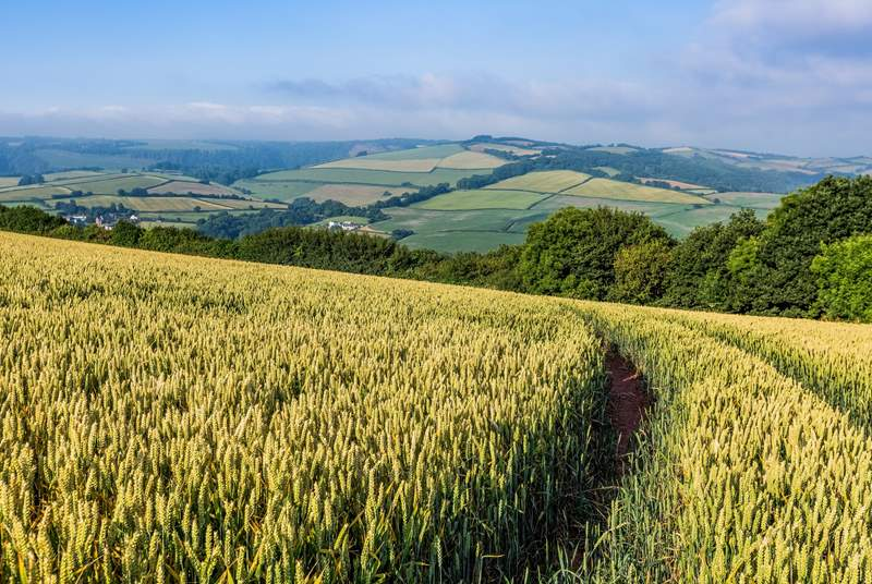 Get lost in the rolling Somerset hills.