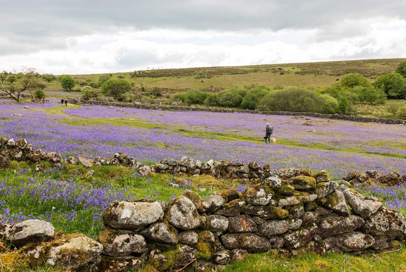 Dartmoor is a stunning place to walk or cycle at any time of year.