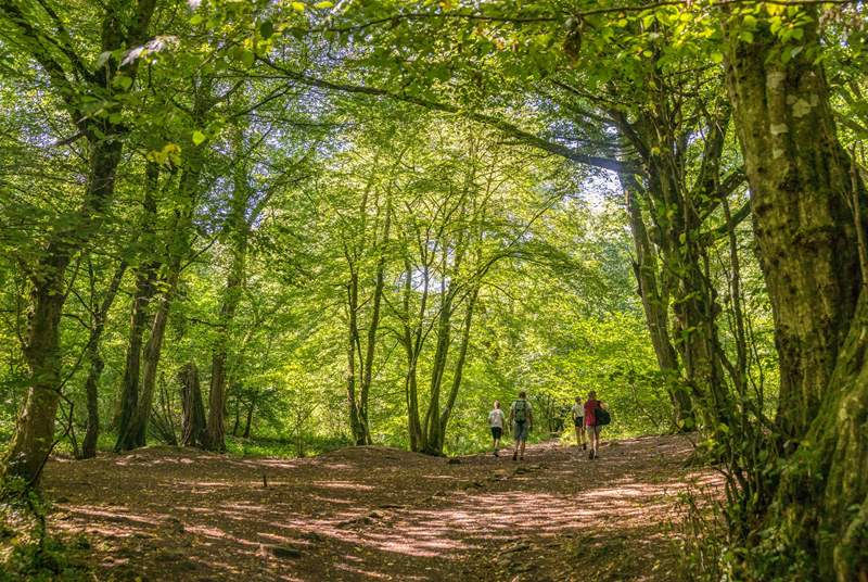 The Mendip Hills are a paradise for walkers and cyclists.