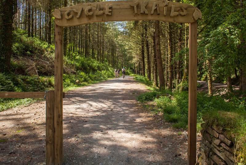 Discover the cycle trials at Cardinham Woods.