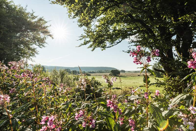 Spend the day exploring the lovely countryside of Hartland.
