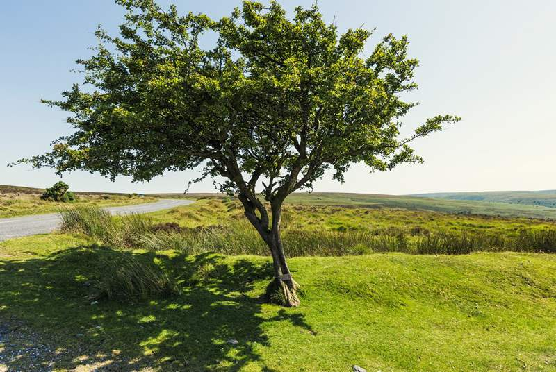 Spend the day exploring the wilds of Exmoor.