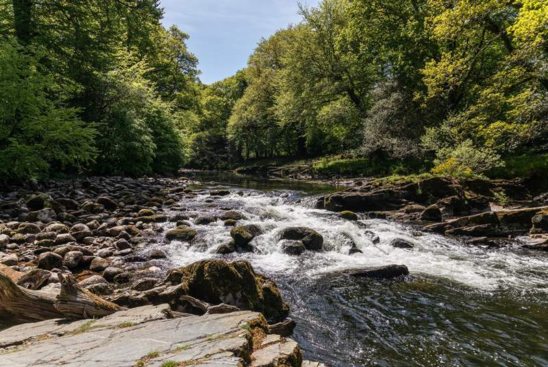 So much to explore in this enchanting part of the world. The River Dart is a truly magical place