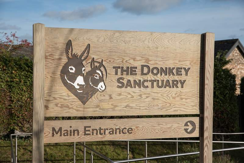 The Donkey Sanctuary at nearby Salcombe Regis has free admission and is home to hundreds of rescued donkeys and mules.
