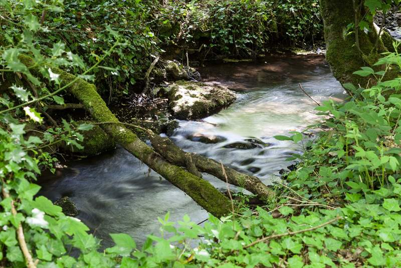 The stream which runs along the bottom of the grounds.