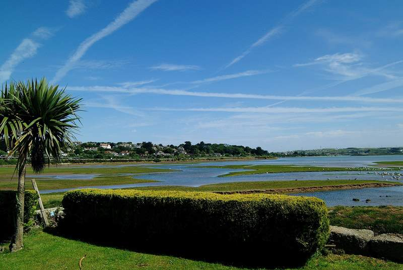 Hayle estuary is a bird watchers' paradise.