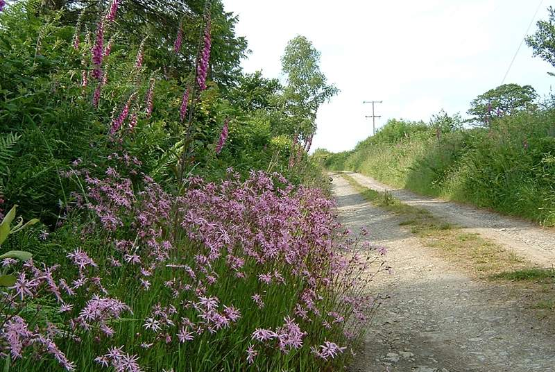 Part of the track which approaches the cottage.