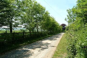 The pretty tree-lined driveway that leads to Butterwell House.
