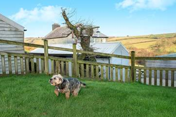 Your four legged friend will simply love it here