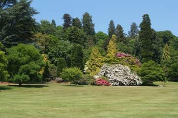 The gardens at Killerton House, another National Trust property for an outing.