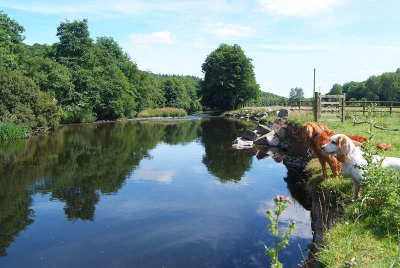 A beautiful stretch of the River Exe borders the farmland. A perfect picnic spot (with a barbecue) and for wild swimming too! The water is very deep so take care with children.