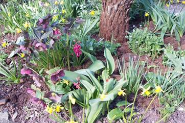 This is the spring time garden - an absolute delight of colour.