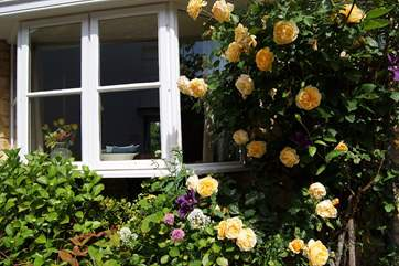 This cottage even has summer roses climbing at the front.