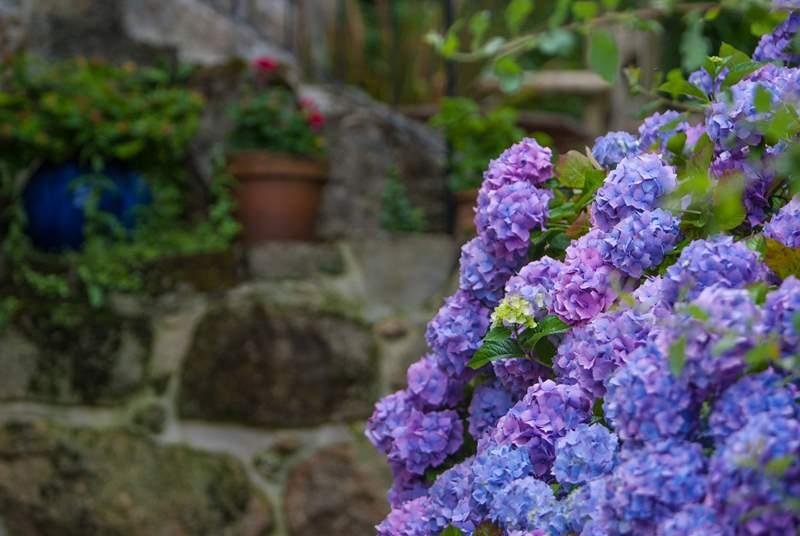The garden in bloom.