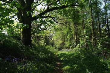 Guests are welcome to walk through the Owners' woods and fields.