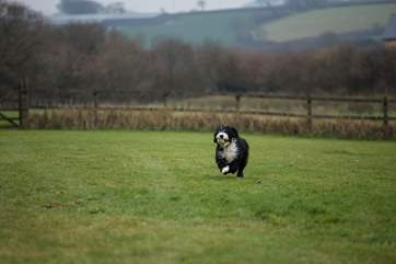 This is one of the  paddocks where your four legged friend can play. This is Milo - happy to let guests have this space to themselves!