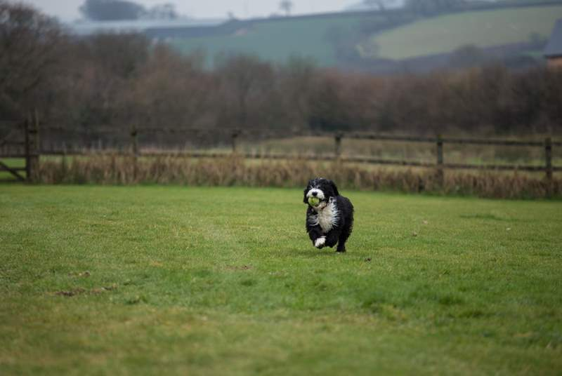 This is one of the paddocks where your four-legged friend can play. This is Milo - but he is happy to let guests have this space to themselves!