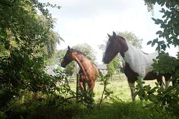 The Owners' horses graze in the surrounding fields.