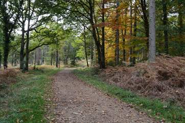 Miles of cycle tracks and footpaths take you thorugh The New Forest National Park, with ancient forest and open heathland.