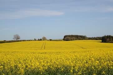 Rural Dorset in the spring.