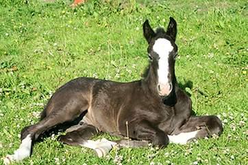 Magic when she was a foal.
