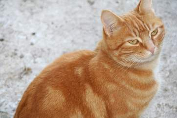 Rusty, the very affectionate farm cat.