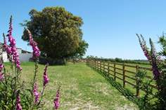 Harvesters Keep - Holiday Cottage - 4.5 miles NE of Truro
