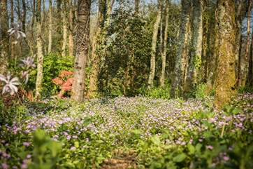 This pretty woodland is a lovely place to wander, especially in the spring and summer months.