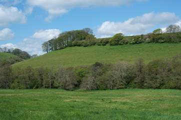 This is the pretty hillside directly behind Celtic Blessing, a haunt for buzzards and other wildlife visitors.