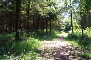 The nearby Ashclyst Forest is full of paths and peaceful walks.