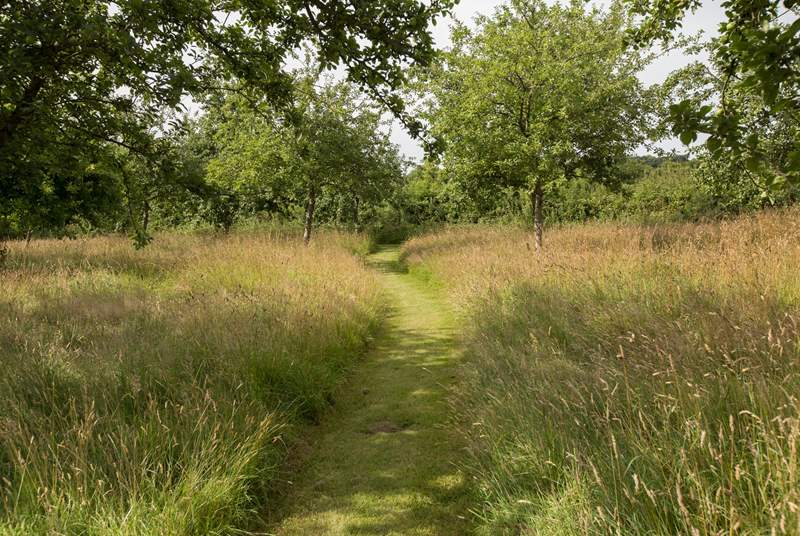Little paths are cut through the orchard in the summertime leading you to wonderful places to sit and take in the surroundings. In the Spring the trees are thick with blossom.