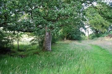 Tree walk by the stream.