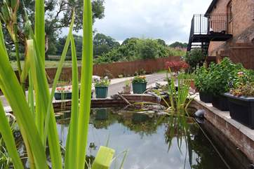 There is a pretty ornamental pond in front of the barn - the steps up to the accommodation are in the background.