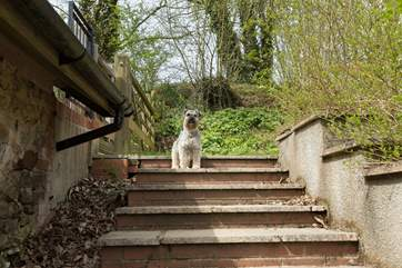 Four-legged friends are most welcome here. These are the alternative, stone steps,  that lead up the side of the barn to the garden.