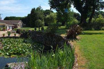 In front of the parking area there is a beautiful pond with lillies, goldfish and all number of visiting wild birds.