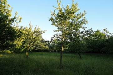 You are welcome to wander through the paddocks and orchard along the footpath.