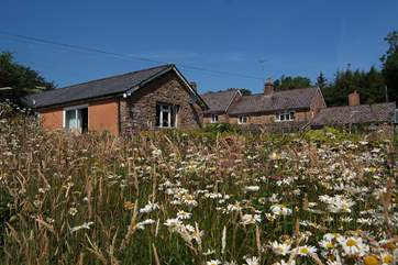 The gardens around Foxlair Cottage are a mixture of lawns and wildflowers.