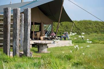 Woody is further on from Hobie in the seven acre meadow with a sheltered barbecue area set off to the side.