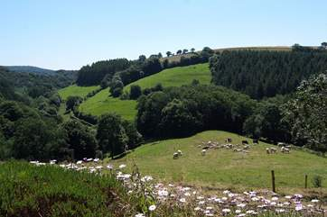 This is the view down the valley from your garden and from the summer-house. You will regularly see deer grazing too.