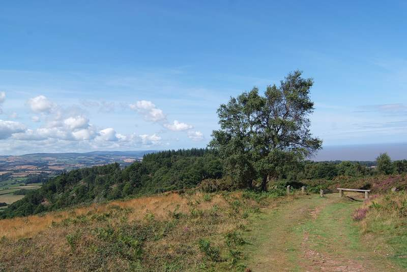 One of the fabulous walks in the Quantock Hills. You can see the Bristol Channel and Exmoor in this photograph.