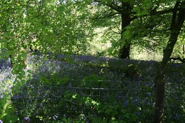 The neighbouring woods in springtime, a lovely place to walk.