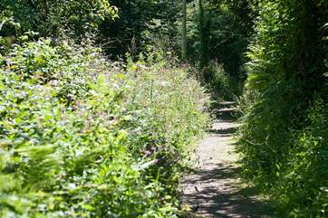 A treat is the little lane that leads down to Lamorna Cove (a fifteen minute stroll to the Cove itself).