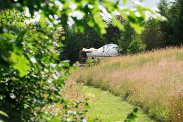 Poppy Yurt is sat proud on its decking in four and a half acres of meadow and woodland.