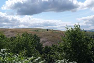 The Quantock Hills are literally on the door step – you can make out a herd of deer in this photograph.