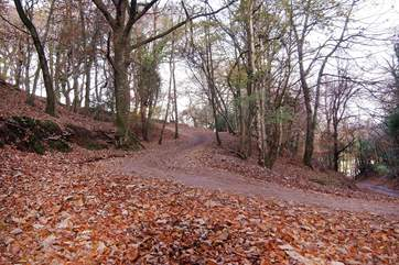 This is the steepest part of the woodland track.