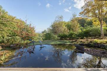 The pond in front of the summer-house is so calm and tranquil - do always supervise children as it is deep.